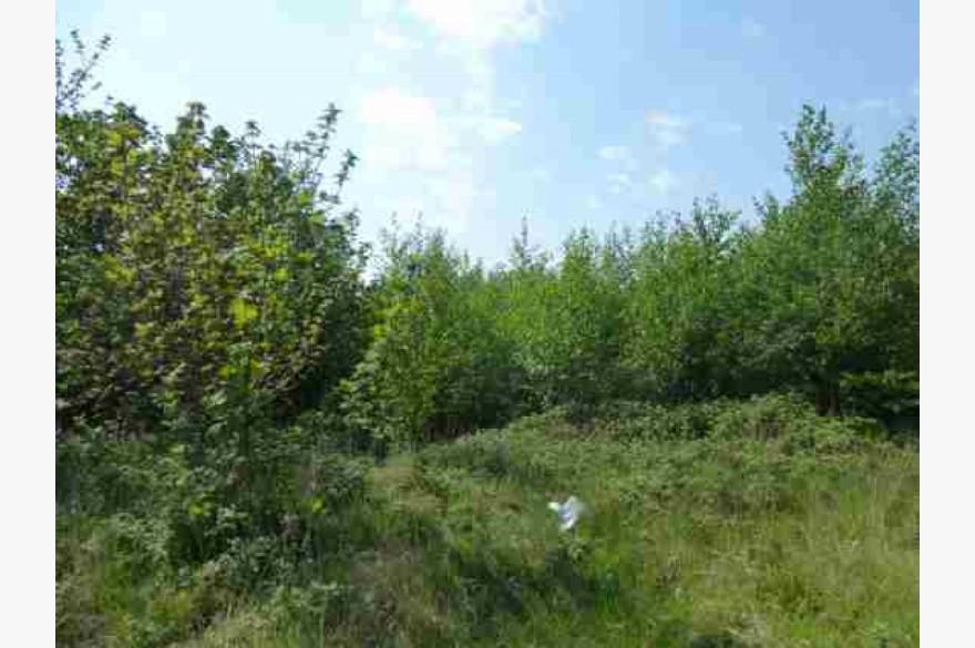 Land For Sale - Image 2