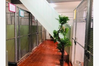 Kennels/cattery For Sale - Photograph 16
